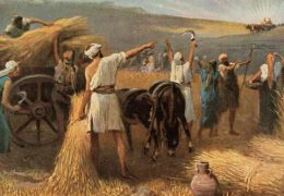To the field of Yeshua